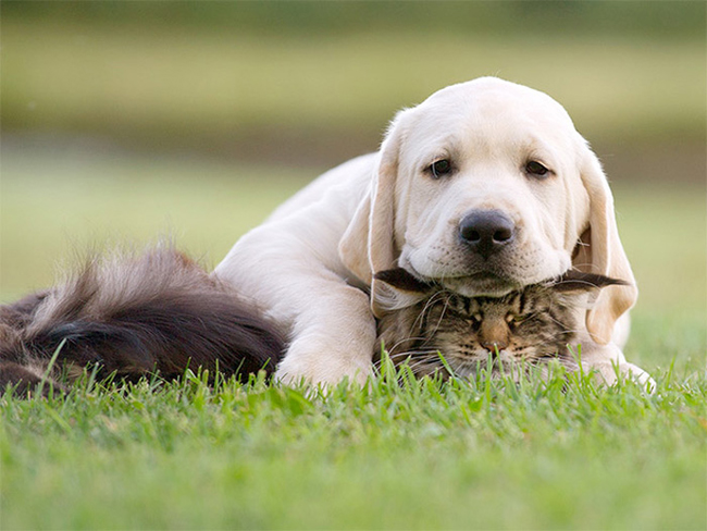 Dogs Lying On Cats-01