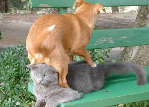 Dogs Lying On Cats-02
