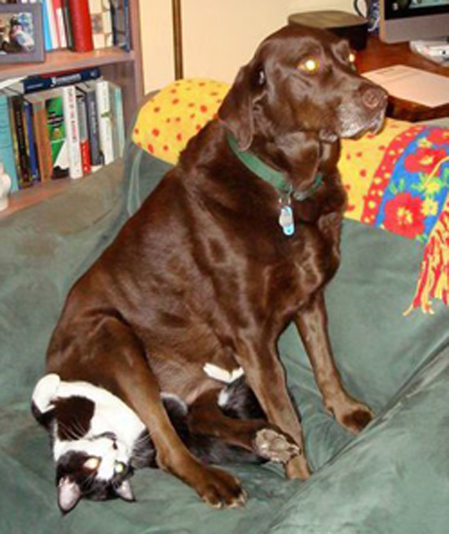 these 19 dogs lying on the cats are proving that change is
