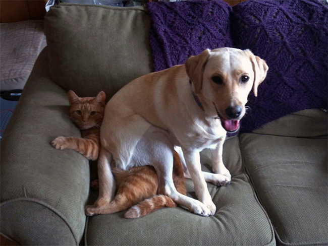 Dogs Lying On Cats-07