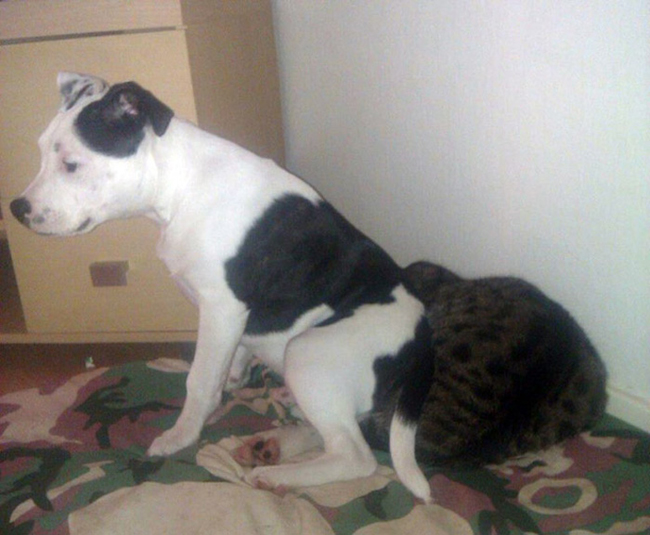 Dogs Lying On Cats-10