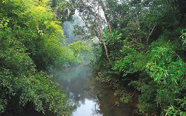 Madagascan Rainforest