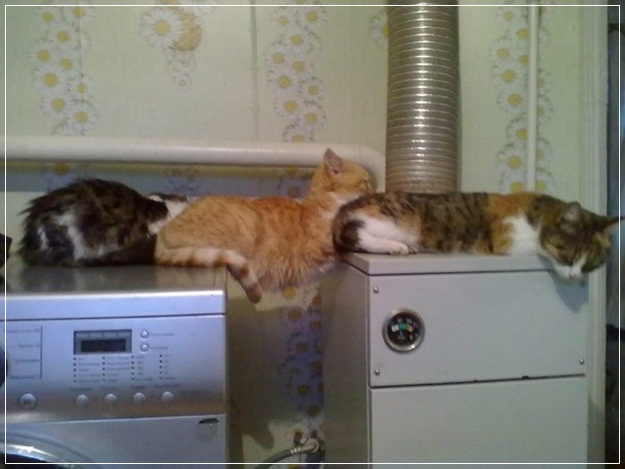 Planking Pictures-16