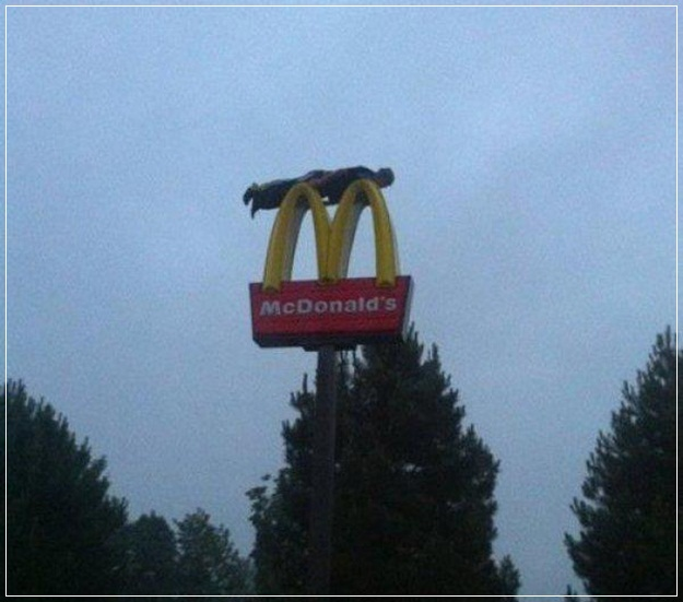 Planking Pictures-18