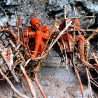 Smoked corpses, Papua New Guinea