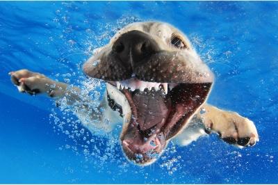 UnderWater Dogs-01