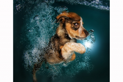 UnderWater Dogs-03
