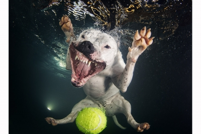 UnderWater Dogs-04