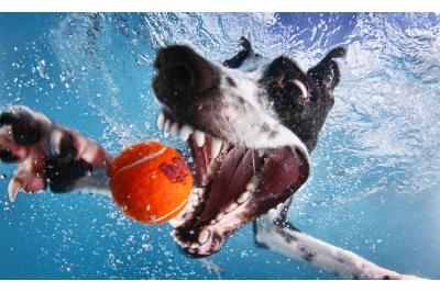 UnderWater Dogs-07