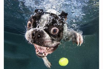 UnderWater Dogs-08