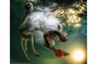 UnderWater Dogs-11
