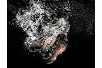UnderWater Dogs-14