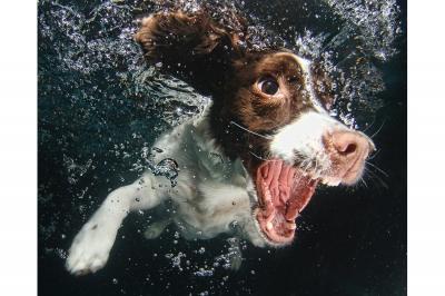 UnderWater Dogs-15