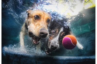 UnderWater Dogs-19