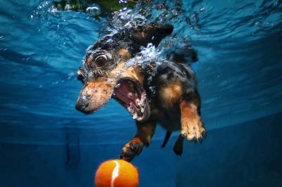UnderWater Dogs-22