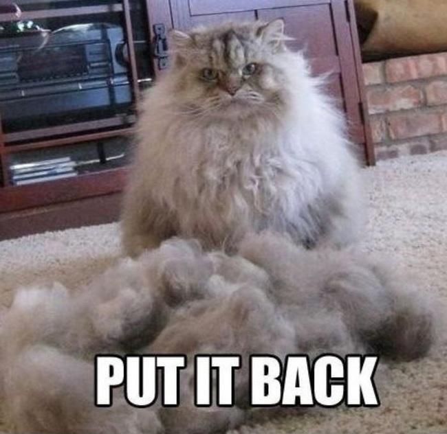Brush them
