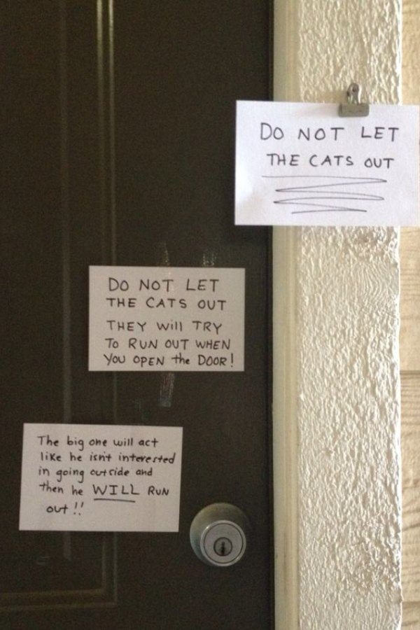 Do not let the cats out