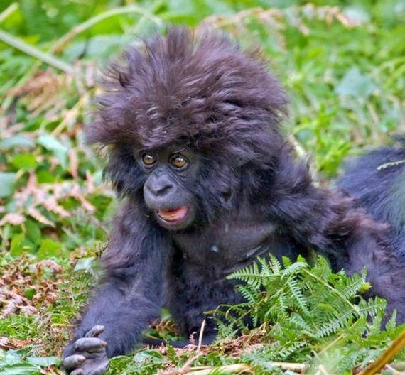 This Baby Gorilla