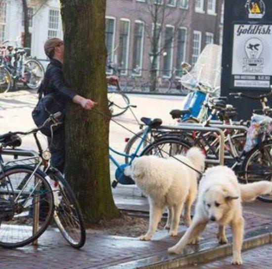 This man walking dogs