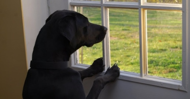 When he doesn't bark at every single person that passes by your house