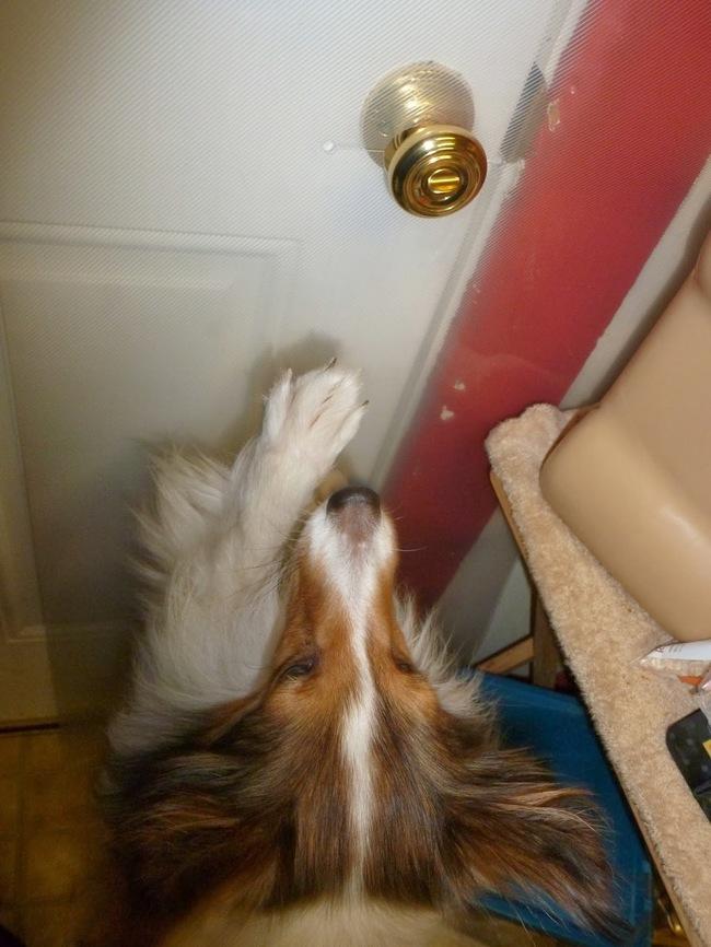 When he just cries at the door instead of scratching it to splinters