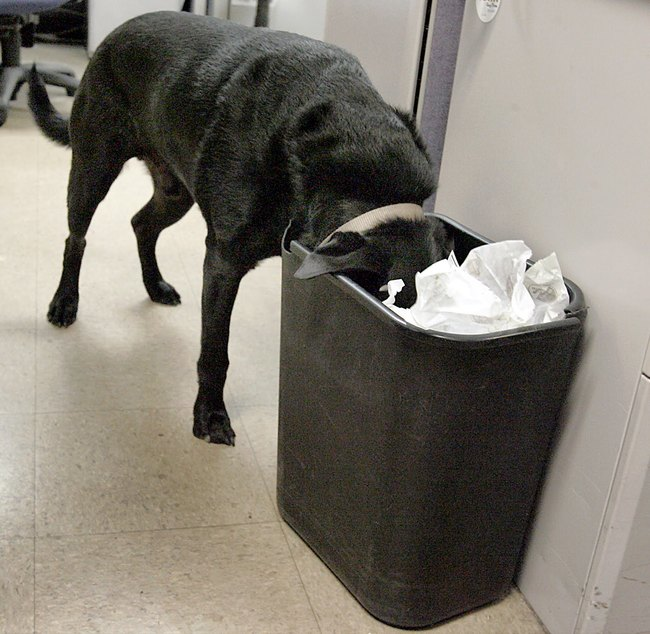 When he only eats the non-toxic things they find in the garbage.