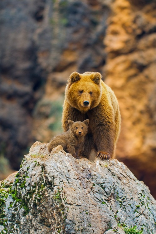 Bear and baby