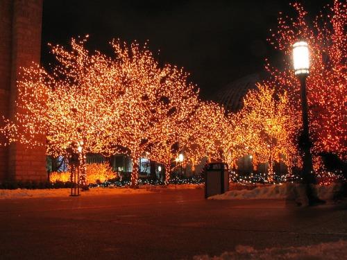 Christmas pics-22