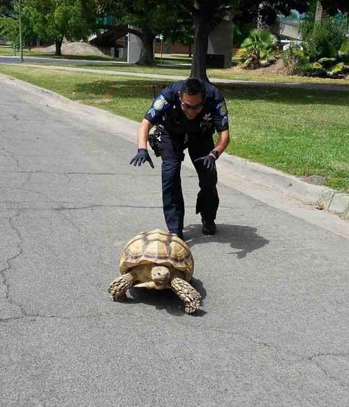 Cops Having Fun-23