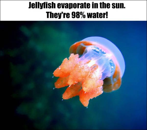 Fact about Jellyfish