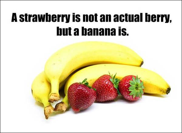 Fact about actual berry
