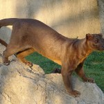 10 Extinct African Animals Probably You Didn't Know About
