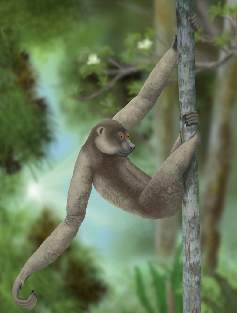 Large Sloth Lemur