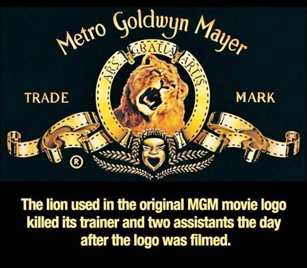 The lion in MGM movie logo