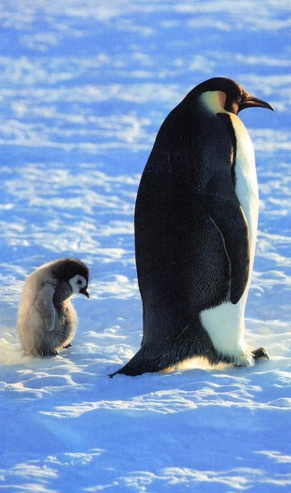 These Cute Penguin and Baby