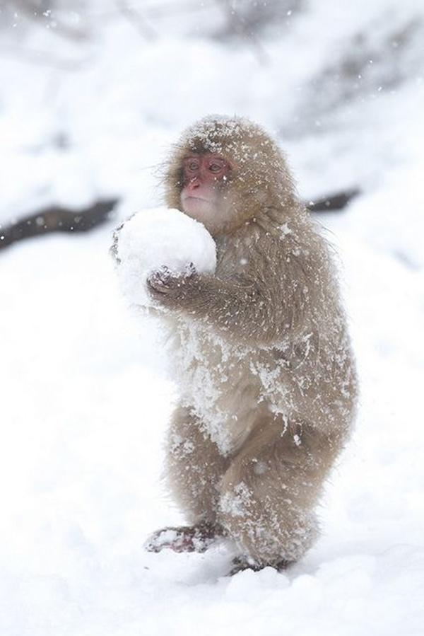 This Baby Monkey