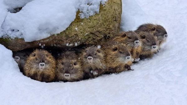 This Beavers Family