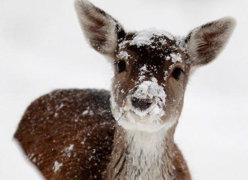 This Deer