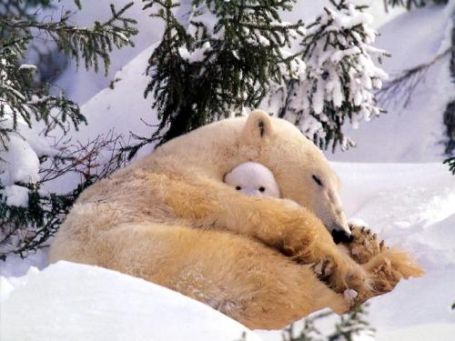 This Polar Bear Mommy