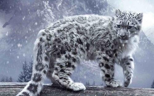 This White Tiger