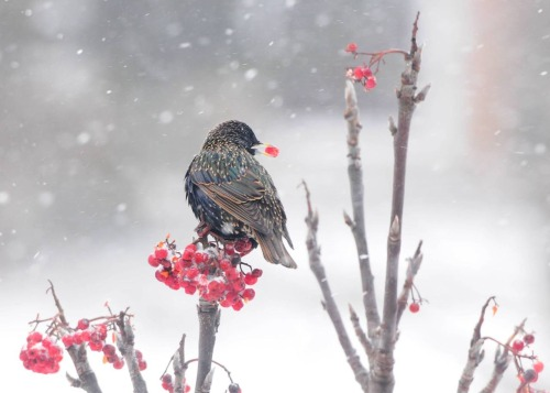 This Winter Bird