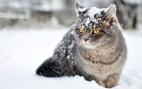 This Winter Cat