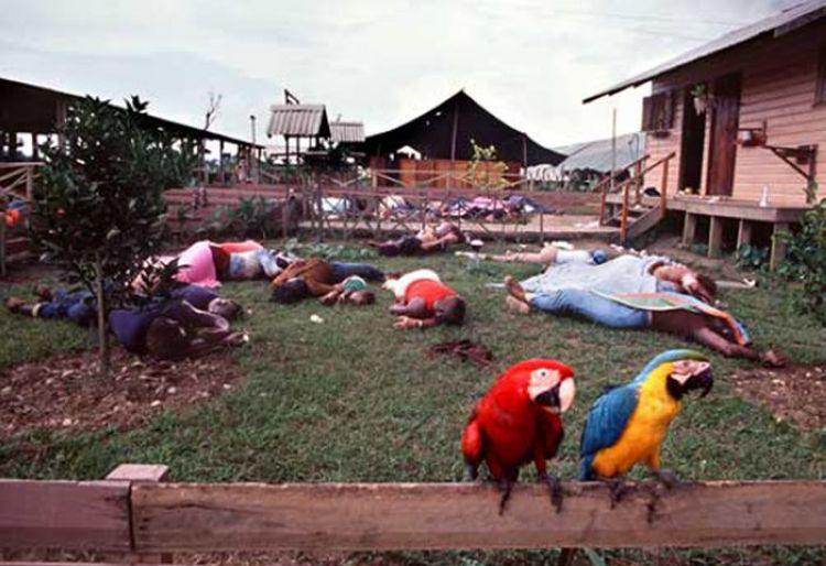 Two macaws perch on a fence in Jonestown, where over 900 members of the People's Temple Cult committed mass suicide, 1978.