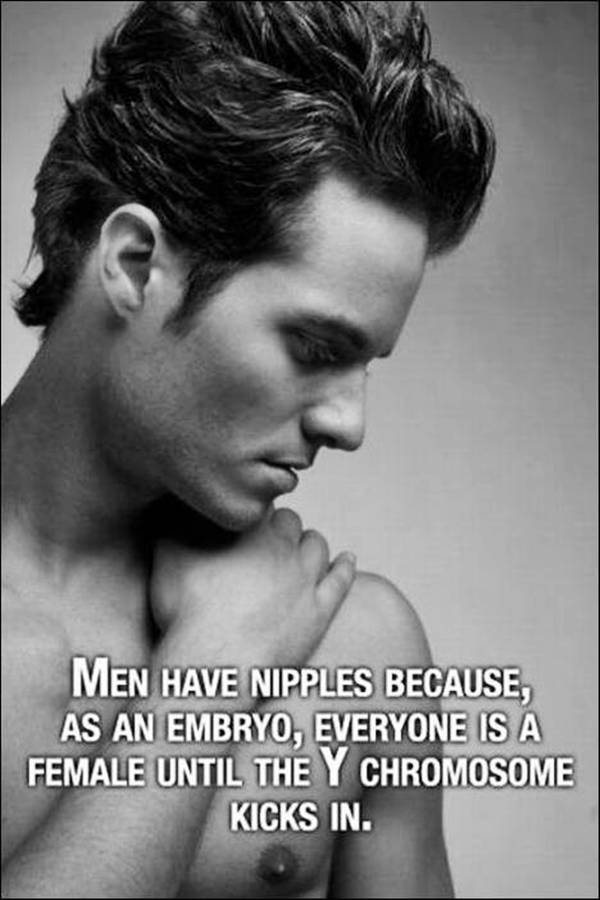Why men have nipples