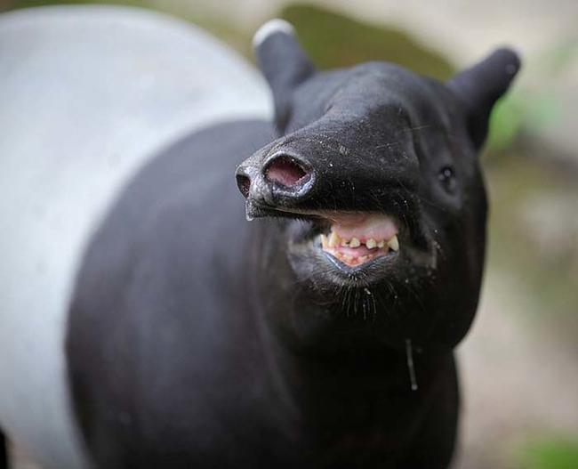 best pics of funny animals