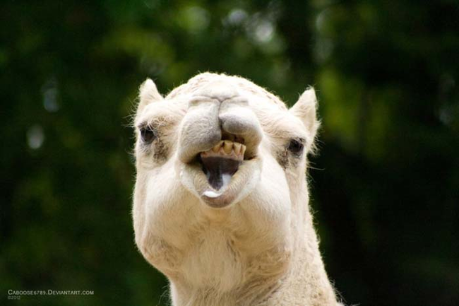 funny animals with funny face