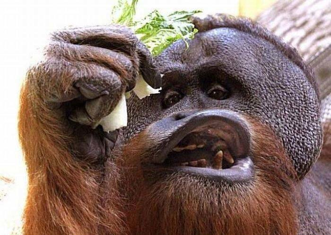 funny photos of animals