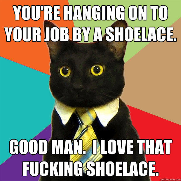 business cat meme Funny Meme Captions
