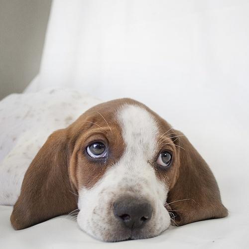 cute puppies pics