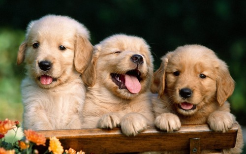 cutest puppy pics